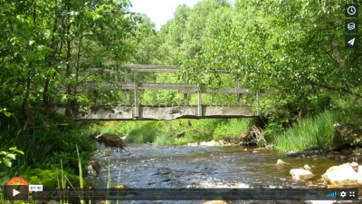 Have a Break: 7 min. Biophilia Meditation at a Forest Stream