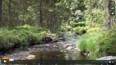 Have a Break: 7 min. Meditation in Nature - Stream Through a Forest